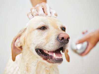 Puis-je laver mon chien avec mon propre shampooing ?