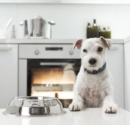 Pourquoi ne pas nourrir mon chien comme moi-même ?