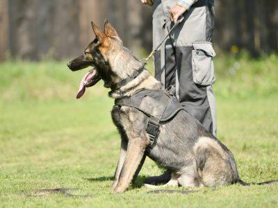 Histoire du chien des armées