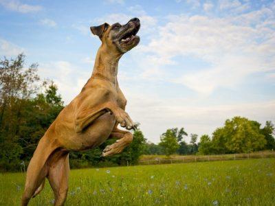 Mon chien saute sur les gens, comment l'en dissuader ?