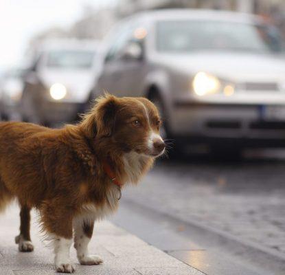 Le chien en ville