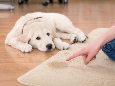 Comment réprimander mon chien ?