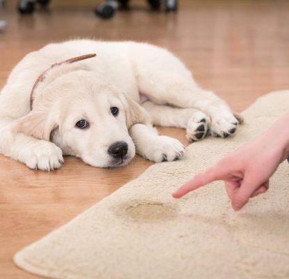 Dois-je réprimander mon chien ?