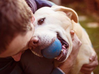 La gestation de la chienne ne modifie en rien son équilibre psychologique