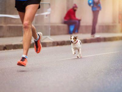 Chien urbain, chien sportif ?