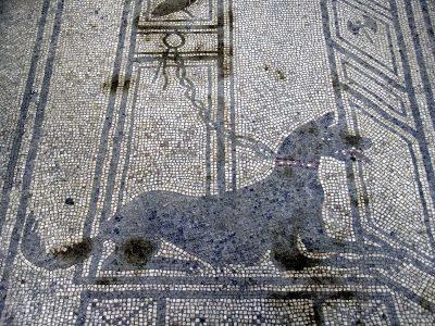 Le chien : mythes et symboles