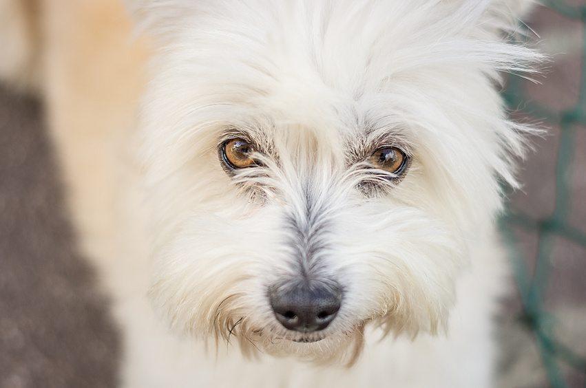 Mon chien est difficile, que faire ?