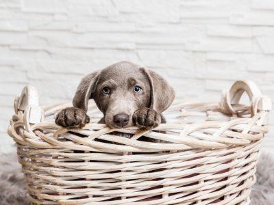 Puis-je augmenter la quantité de croquettes données à mon chien ?