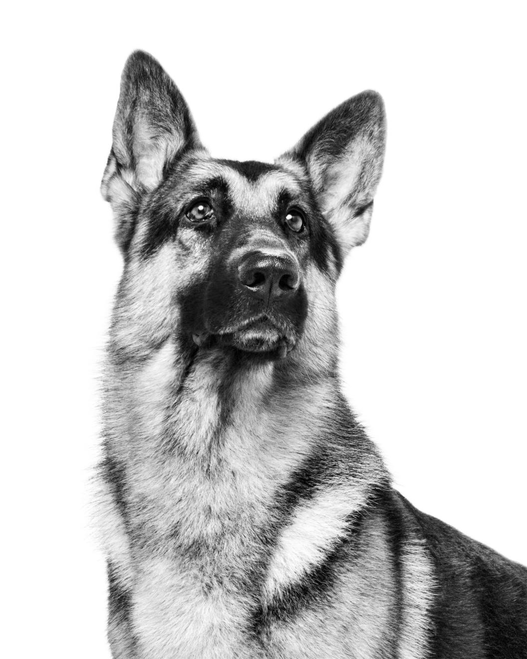 Le rapport des Français à la possession responsable et au bien-être du chien