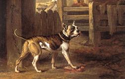 Histoire du Bulldog