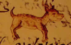 Histoire du Chihuahua