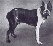 Histoire du Boxer