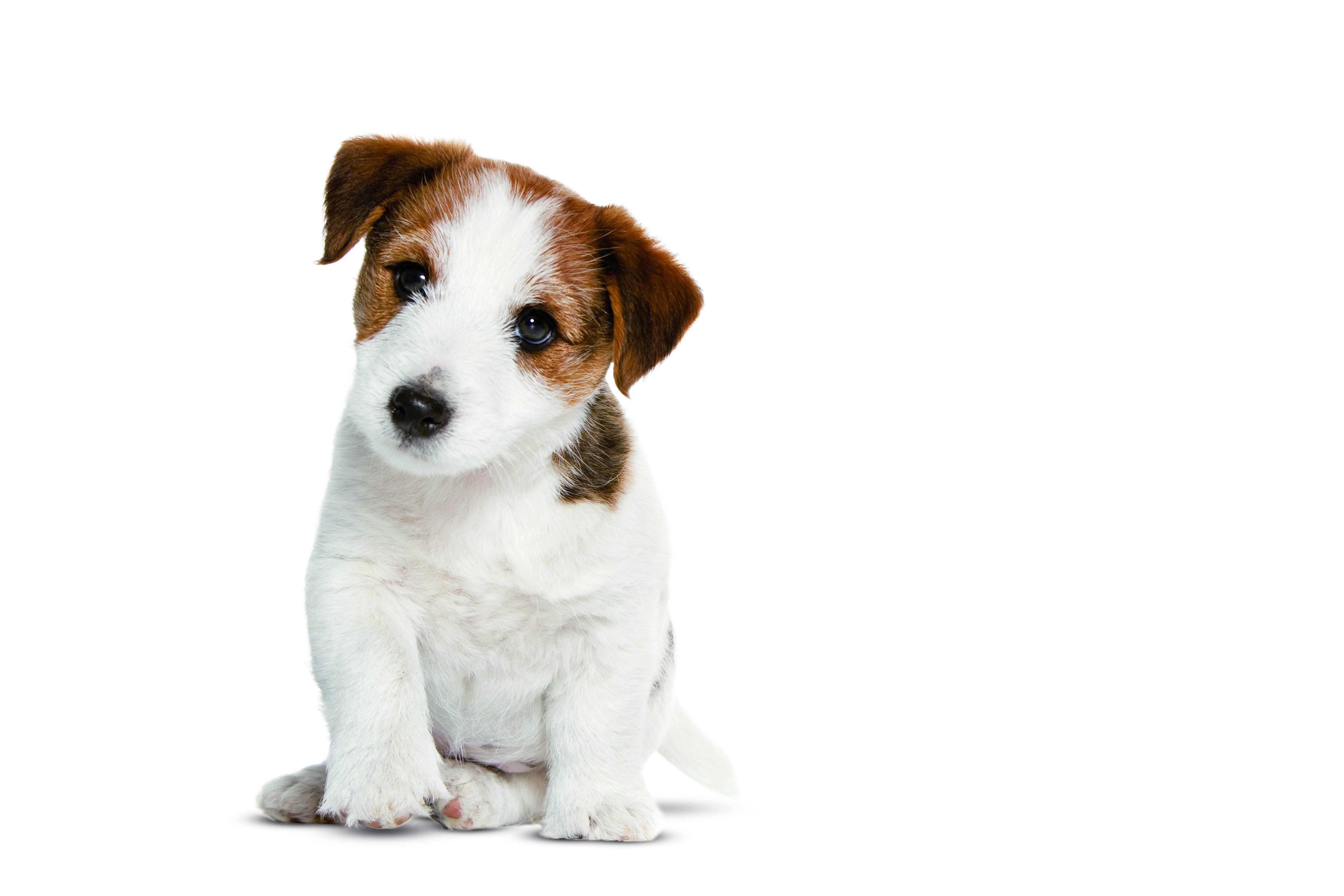 L'identification du chien