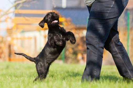 L'Agility, une activité ludique à pratiquer avec son chien