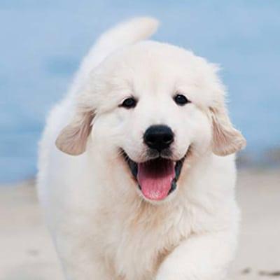 Je pars en vacances, et mon chien ?