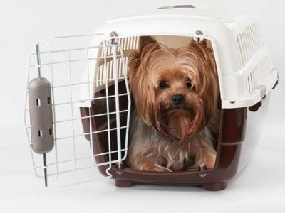 La cage de transport d'un chien