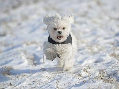 Est-il nécessaire de changer la nourriture du chiot ou du chien en hiver ?
