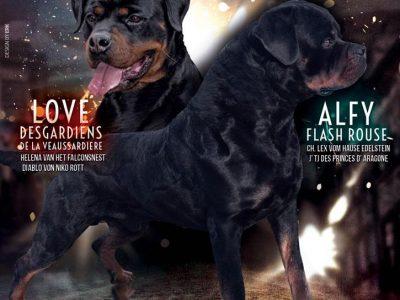 Chiot Rottweiler : 1  mâle – femelle 1 244806