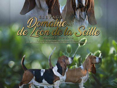 Chiot Basset hound : 1  mâle – femelles 3 246330