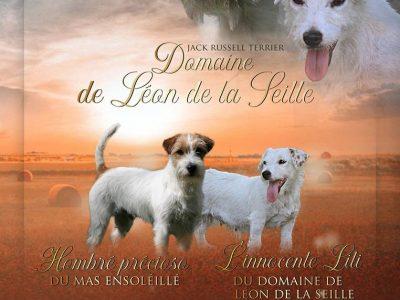 Chiot Jack russell terrier : 1  mâle – femelle 1 245763