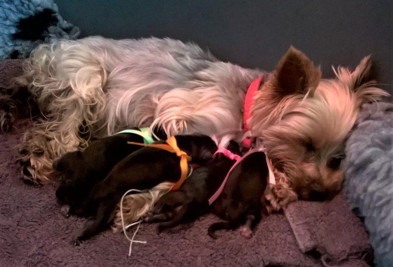 Janice et ses BB le jour de la naissance 25 juillet 2019