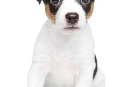 Nom de chien