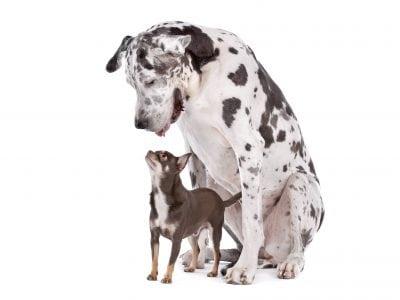 Nourrir un chiot en fonction de sa taille