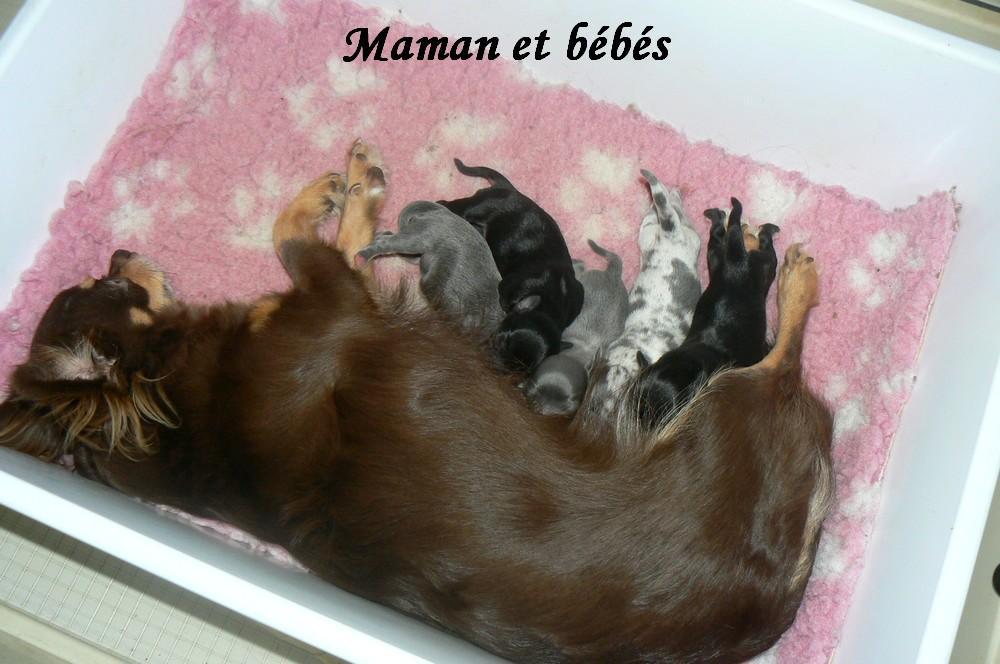 Chiot Chihuahua : 2  mâles - femelles 3 248547