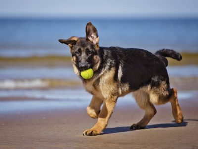 Partir en vacances avec son chien