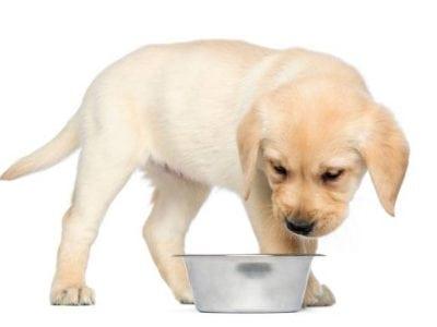 Pourquoi un chiot se détourne-t-il d'un aliment après l'avoir consommé auparavant ?