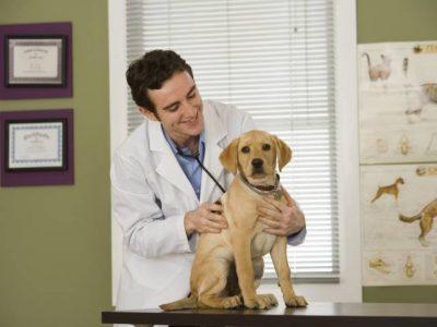 La première visite du chiot chez le vétérinaire