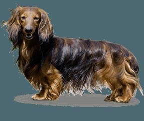 Kaninschen à poil long