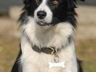 Une médaille pour un chien